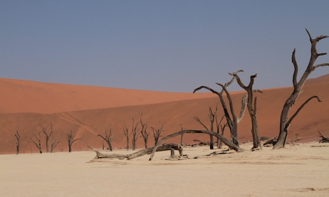 Dead Camelthorns of Deadvlei
